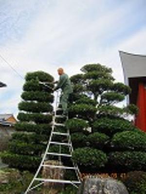 剪定 木 まき の の